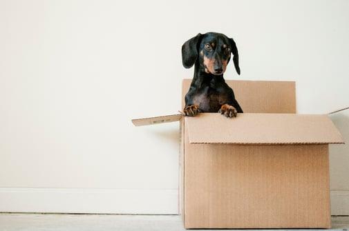 small dog in a cardboard box