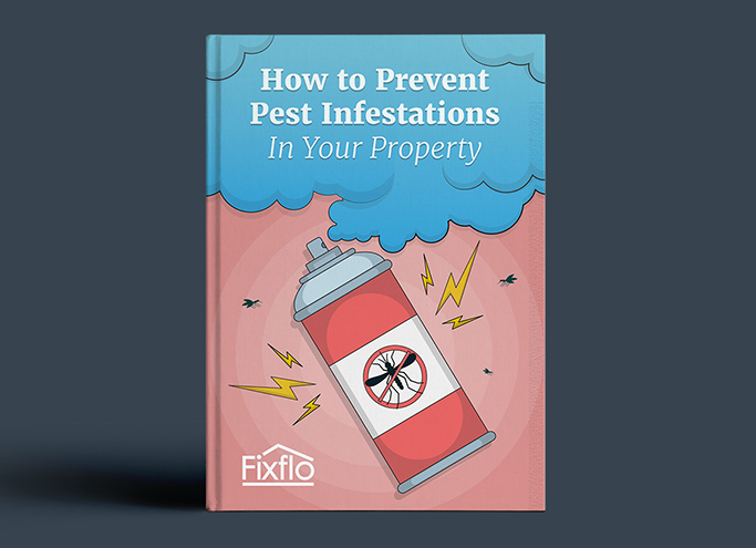 How to Prevent Pest Infestations in Your Property