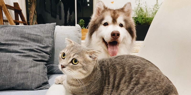 Will Tenants With Pets Be Better Off in 2020?